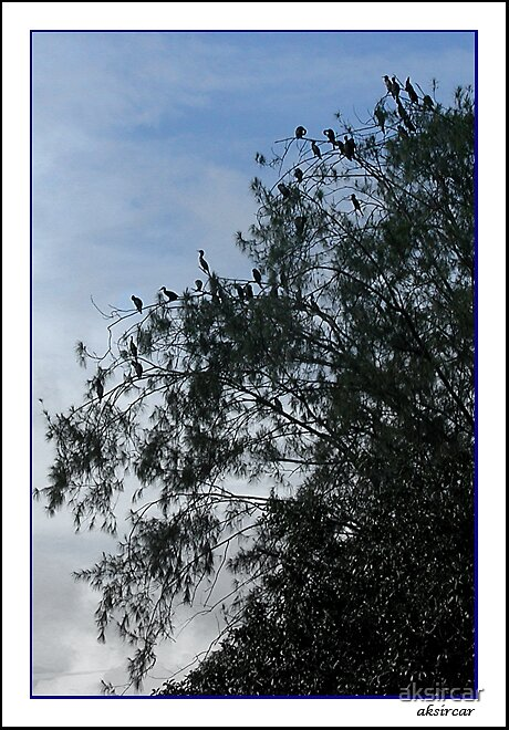 Birds by aksircar