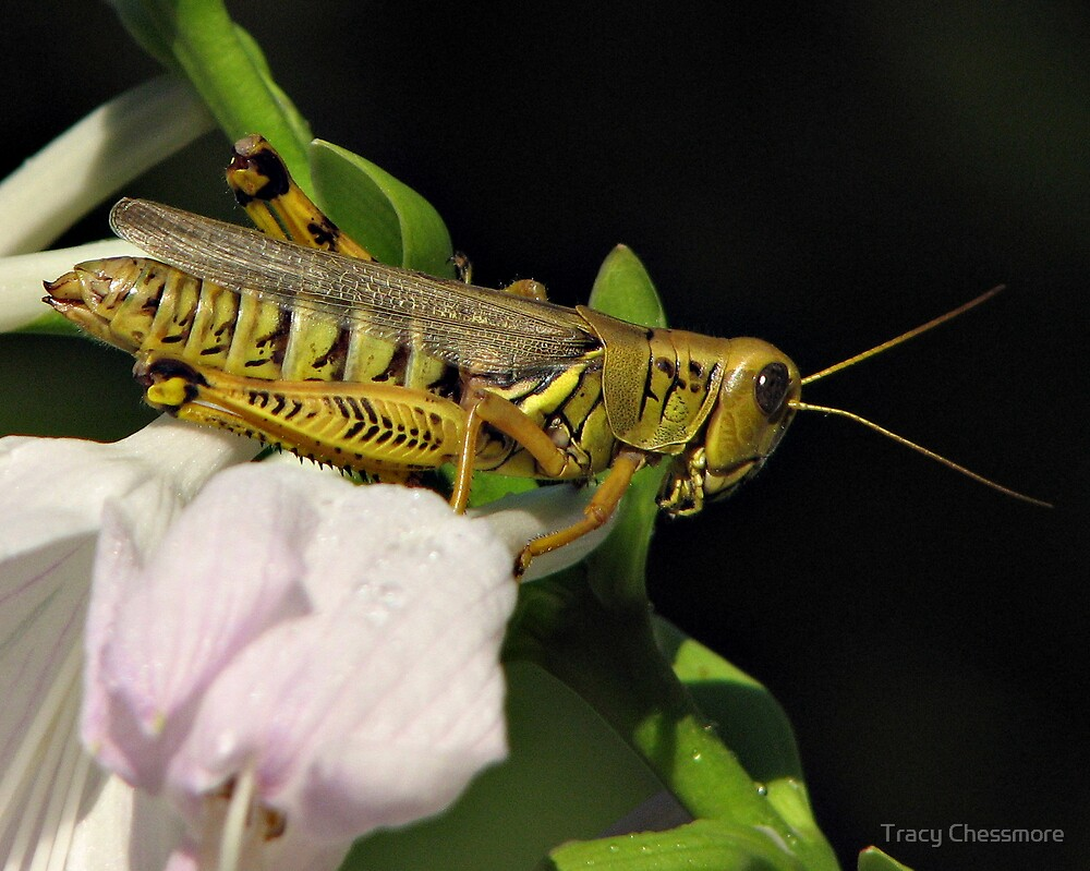 Grasshopper's Paradise  by Tracy Chessmore