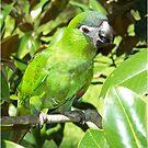 Hahns Macaw by byuchic