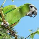 Mini Macaw Playing in the Tree by byuchic