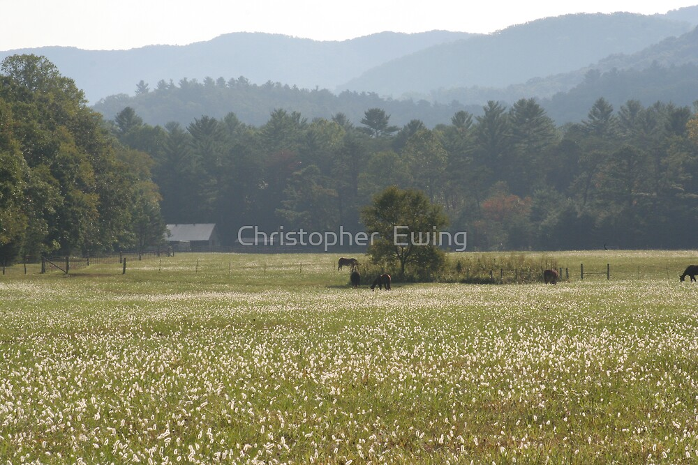 early morning graze by Christopher  Ewing
