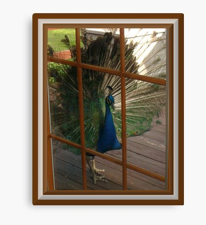 Won`t You Let Me In? Canvas Print
