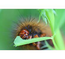 Garden muncher!! Photographic Print