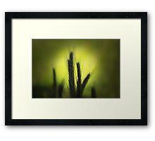 La Luz Framed Print