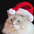 Christmas Ragdoll Cat by Maria Dryfhout