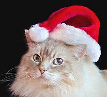 Christmas Ragdoll Cat by Maria Dryfhout