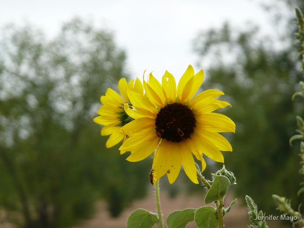 Back to Back Sunflowers by Jennifer Mayo