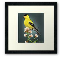Finch Framed Print
