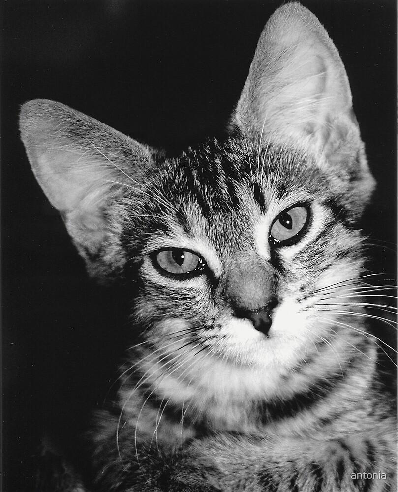 big ears by antonia