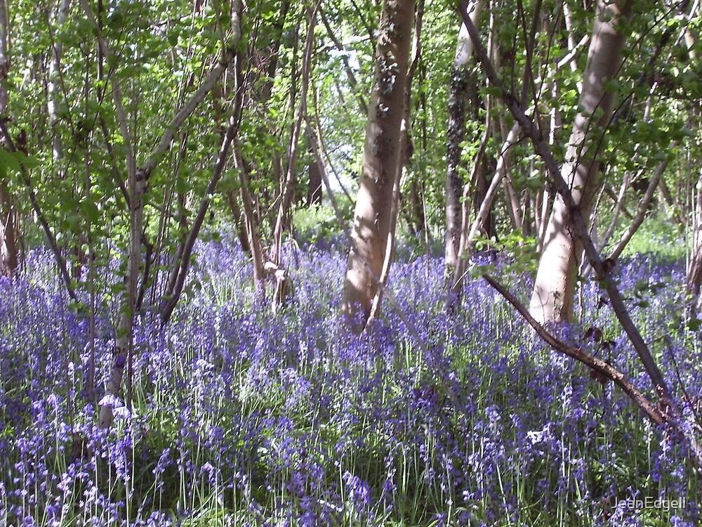 Bluebell Woods by JeanEdgell