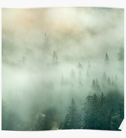 Forest Trees Fog in the Mountains Poster