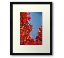 Maple Red Framed Print