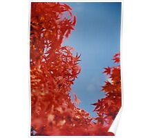 Maple Red Poster