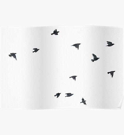 The Raven - Birds in Black and White Poster