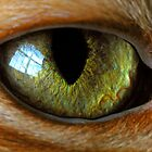 cat&#x27;s eye by J.K. York