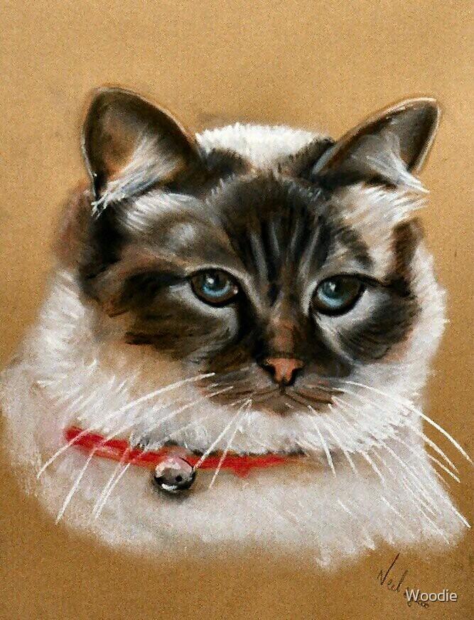 Tabby Cat in pastel by Woodie