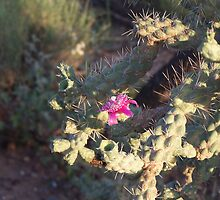 Cane Cholla 1955 by tkepner