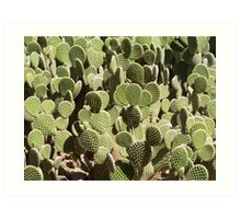 Bunny Ears, Polka Dot Pricky Pear Cactus 1990 Art Print