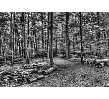 Forest 4 Photographic Print