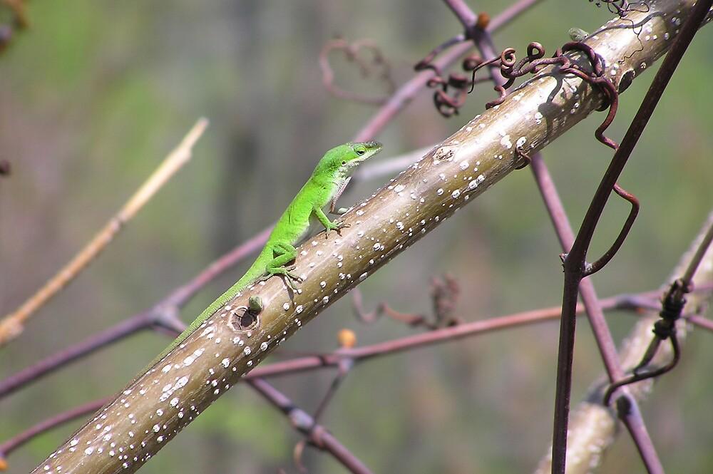 Male Anole-green by Kerri Kenel