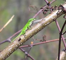 Male Anole-green by Kerri Kenel