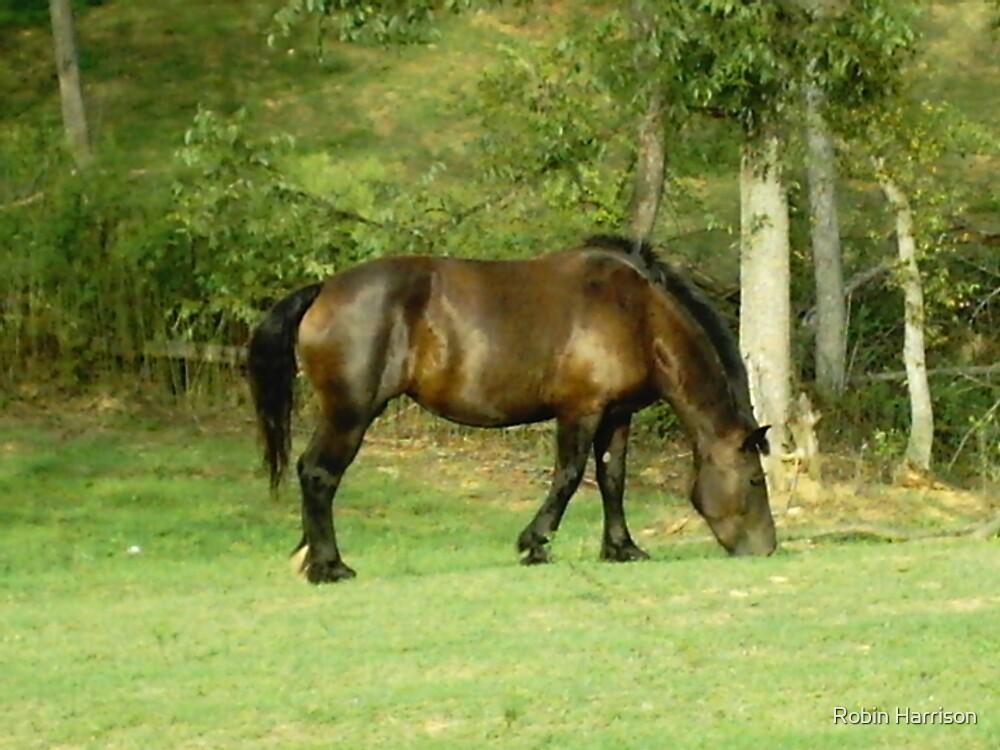 Horse by Robin Harrison