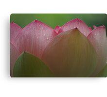 Petals Of Lotus Canvas Print