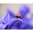 Ladybird10 by Ellen van Deelen