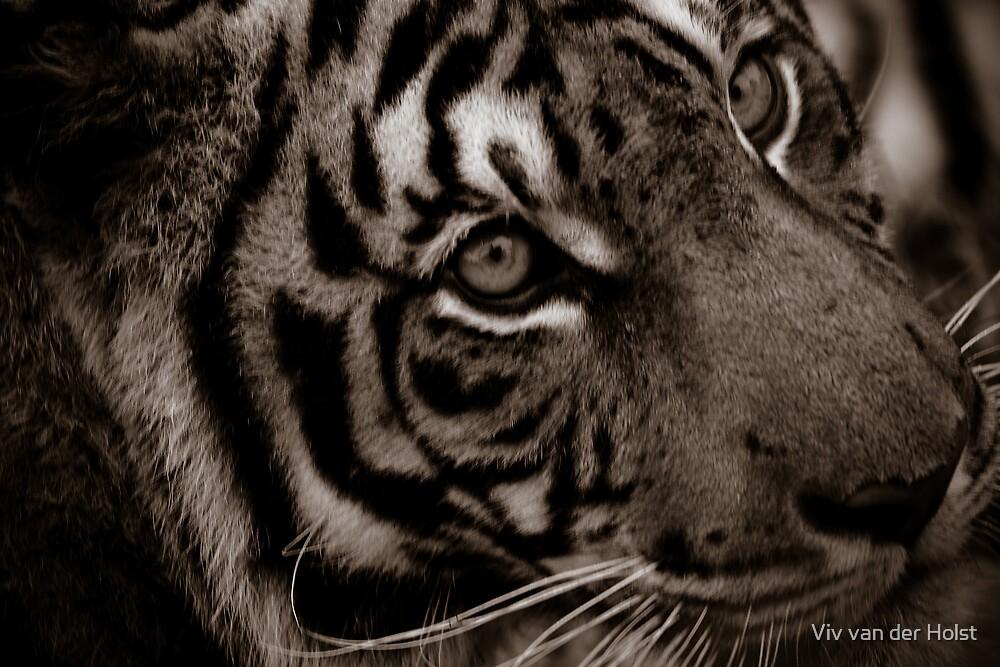 Tiger, sepia by Viv van der Holst