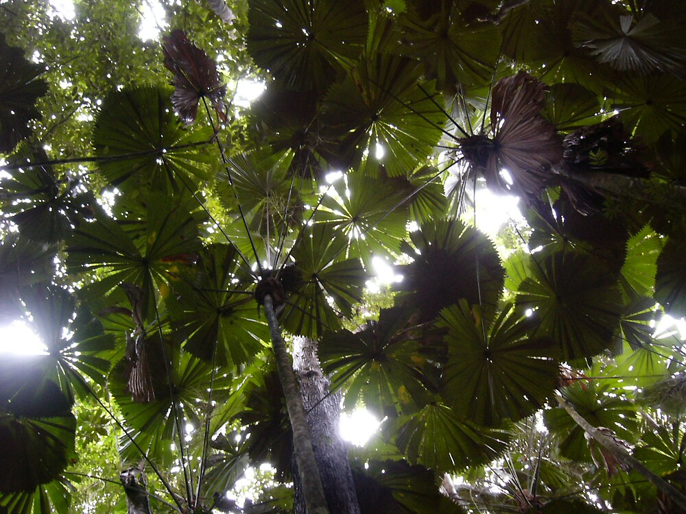 Fan Palm Canopy by Adelia