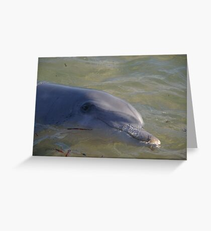 Monkey Mia dolphin, WA Greeting Card