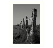 Old Nullabor fence Art Print