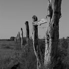 Old Nullabor fence by pmitchell