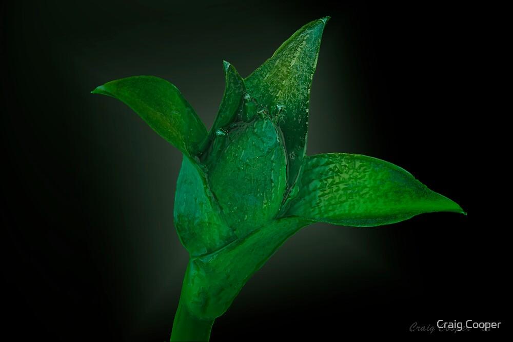 Hosta Flower II by Craig Cooper