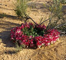 Wreath Flower, WA by pmitchell