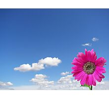 Blooming Bright Photographic Print
