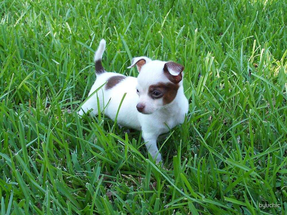 Puppy In The Grass by byuchic