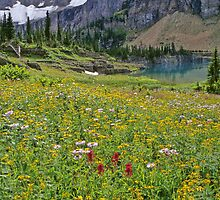 Wildflower Meadow and Iceberg Lake by Terri Foster