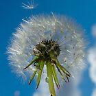 Make a Wish... by Renae