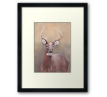 Whitetail Deer Buck Framed Print