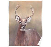 Whitetail Deer Buck Poster