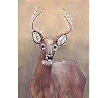 Whitetail Deer Buck Photographic Print
