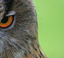 Owl by JamieP