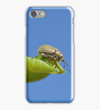 Insect macro photography iPhone Case/Skin