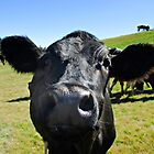 A nosy cow? (pls see notes) by Kanages Ramesh