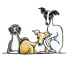 Italian Greyhound Trio Photographic Print