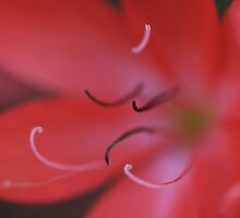 Stamens by Justine Humphries