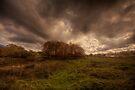 Autumn Colours by Nigel Bangert
