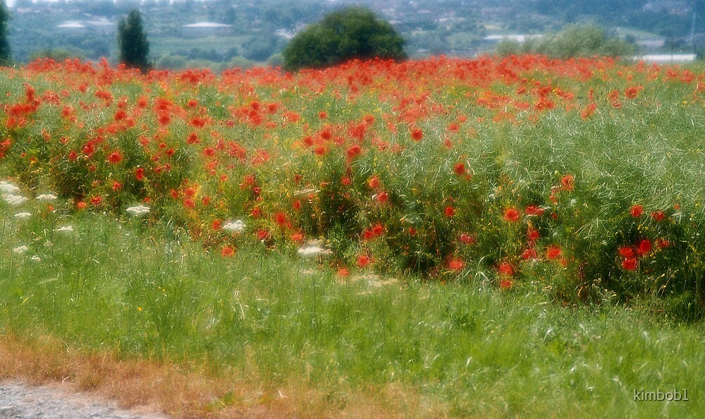poppy field by kimbob1