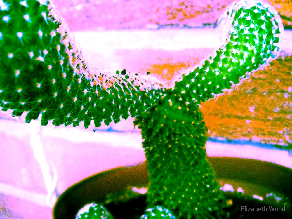 My Cactus Oscar by Elizabeth Wood